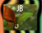JB, 1m12, l'oreille verte du blog
